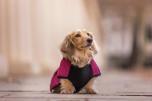 Tax Hundtäcke - Underbelly Coat