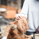 Hundhalsband - Slate Oatmeal